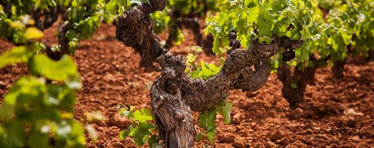 Valencia Wine Tour: Wineries, Wine Tasting and Lunch